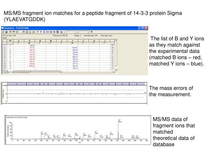 MS/MS fragment ion matches for a peptide fragment of 14-3-3 protein Sigma
