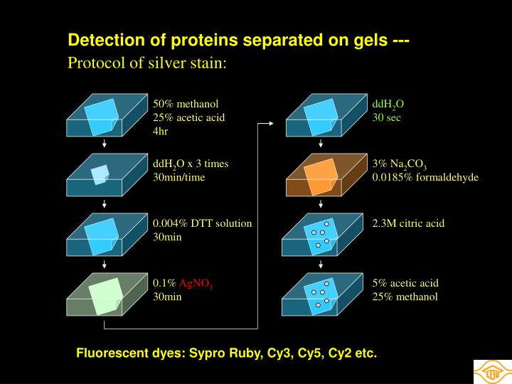 Detection of proteins separated on gels ---