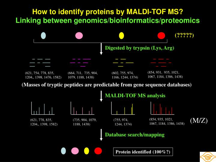 How to identify proteins by MALDI-TOF MS?