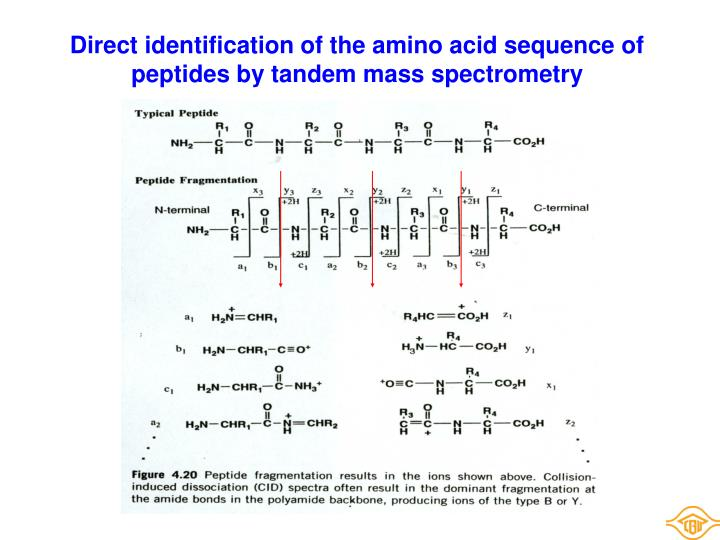 Direct identification of the amino acid sequence of peptides by tandem mass spectrometry