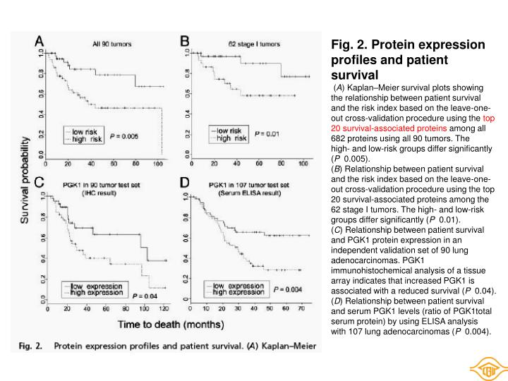 Fig. 2. Protein expression profiles and patient survival