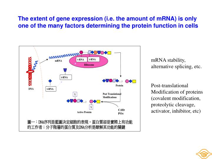 The extent of gene expression (i.e. the amount of mRNA) is only