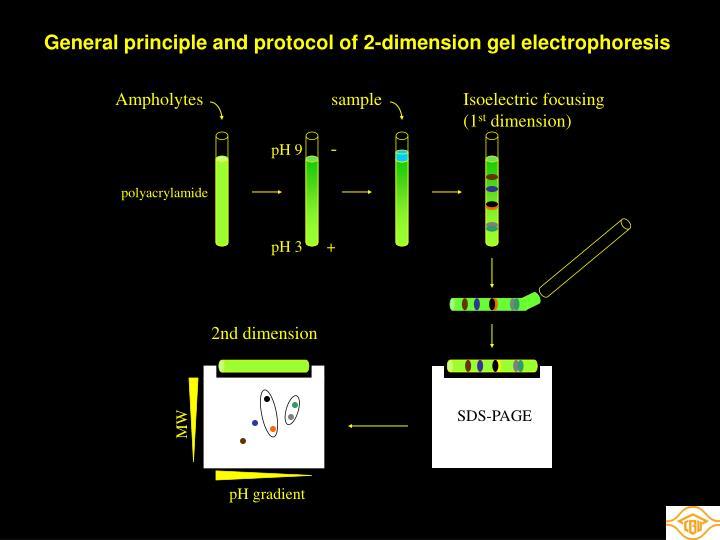General principle and protocol of 2-dimension gel electrophoresis