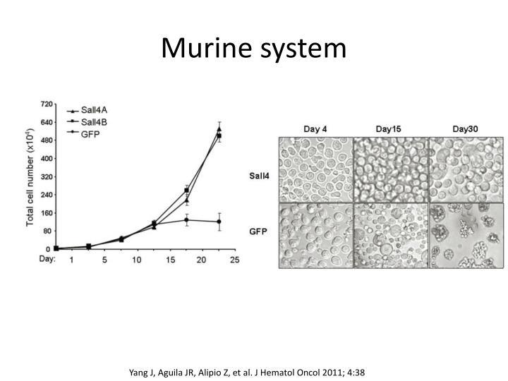 Murine system