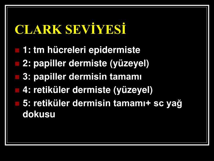 CLARK SEVİYESİ