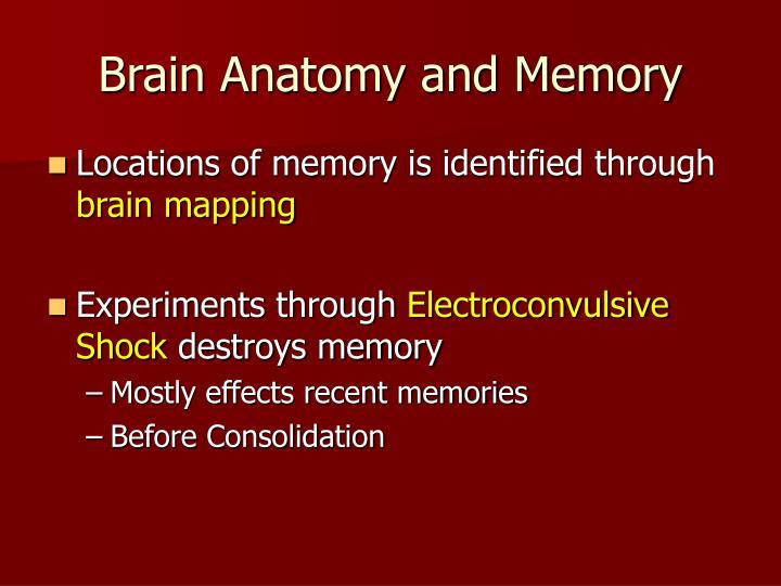 Brain Anatomy and Memory