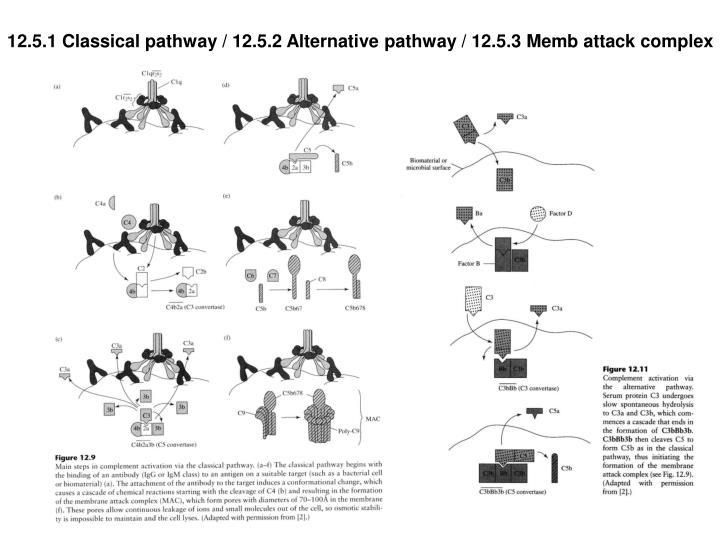 12.5.1 Classical pathway / 12.5.2 Alternative pathway / 12.5.3 Memb attack complex