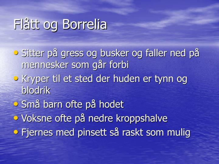 Flått og Borrelia