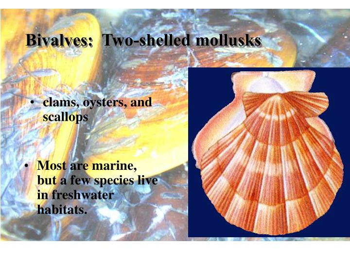 Bivalves:  Two-shelled mollusks