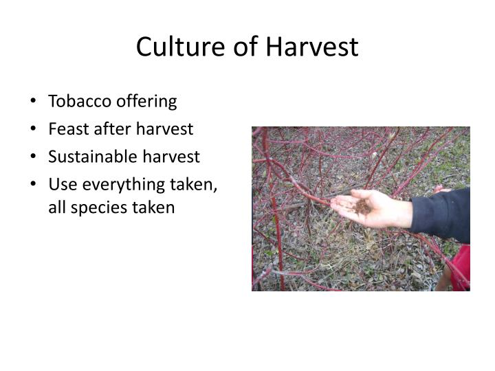 Culture of harvest