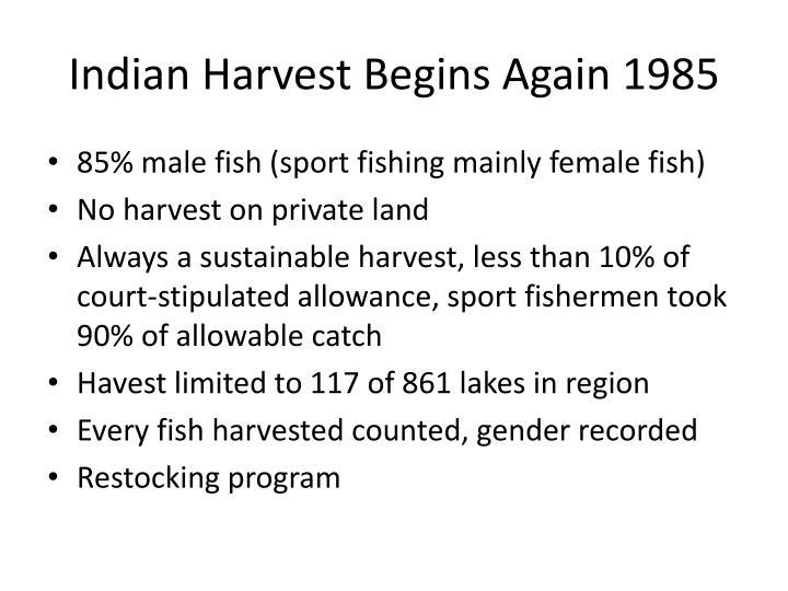 Indian Harvest Begins Again 1985