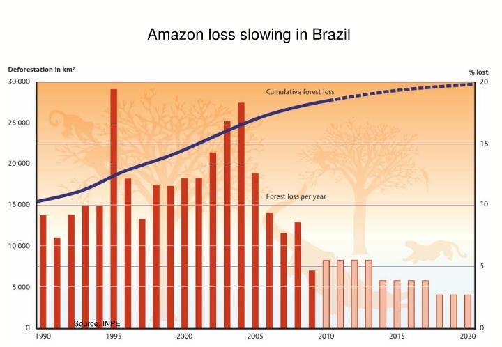 Amazon loss slowing in Brazil