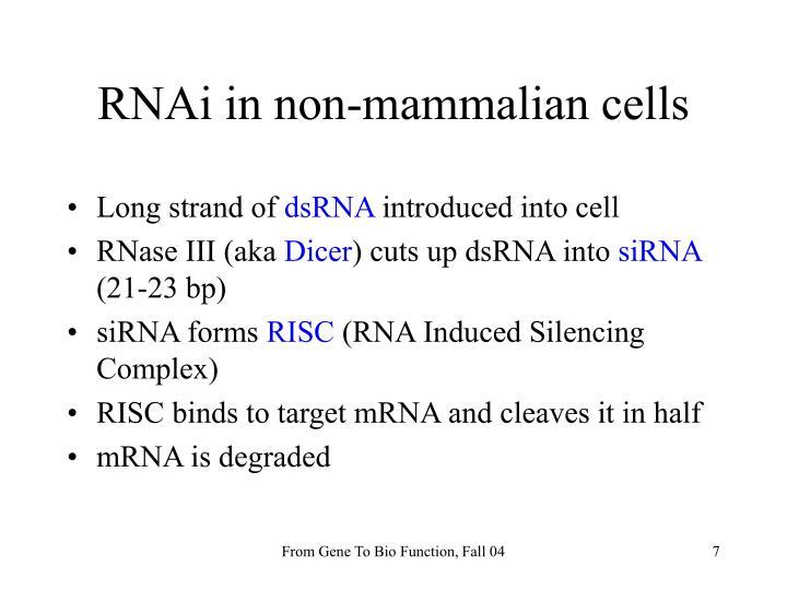 RNAi in non-mammalian cells