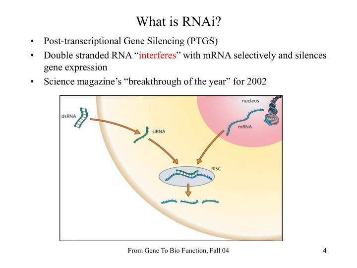 What is RNAi?