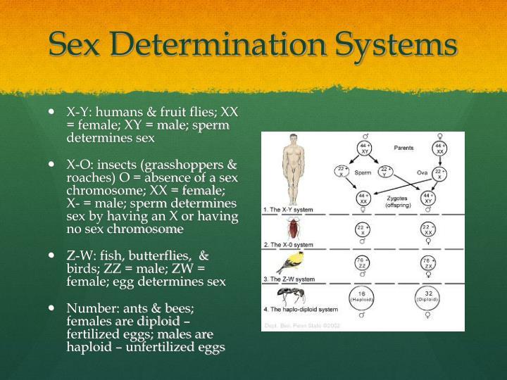 Sex Determination Systems