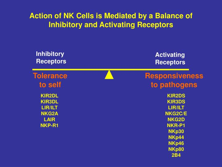 Action of NK Cells is Mediated by a Balance of