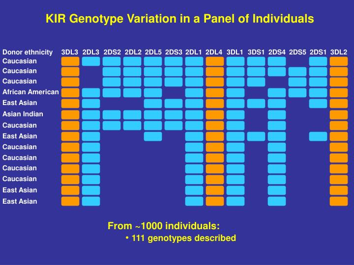 KIR Genotype Variation in a Panel of Individuals