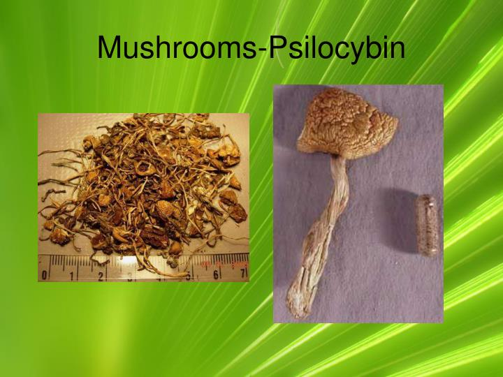 Mushrooms-Psilocybin