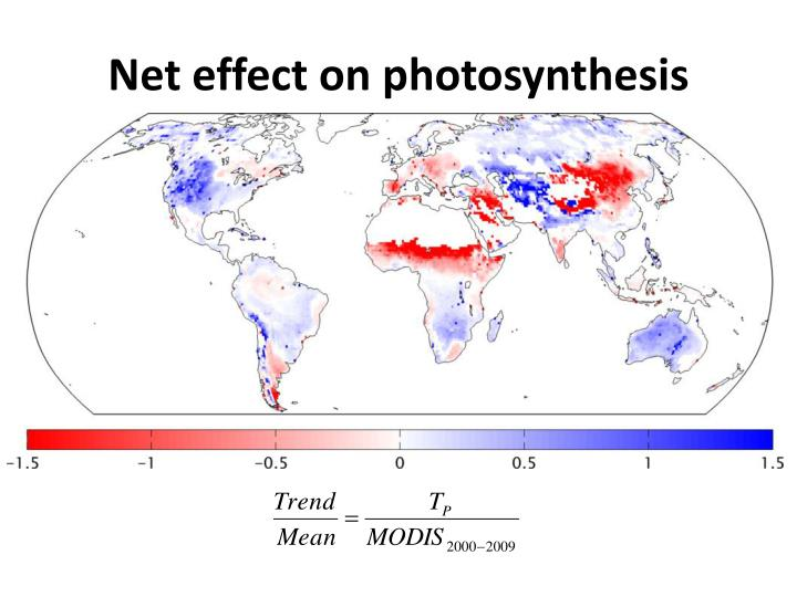 Net effect on photosynthesis