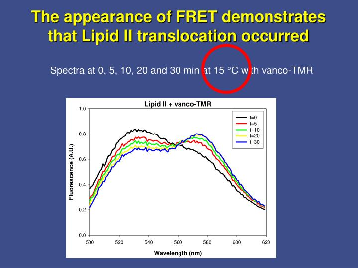 The appearance of FRET demonstrates that Lipid II translocation occurred