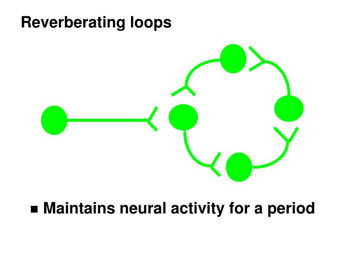 Reverberating loops
