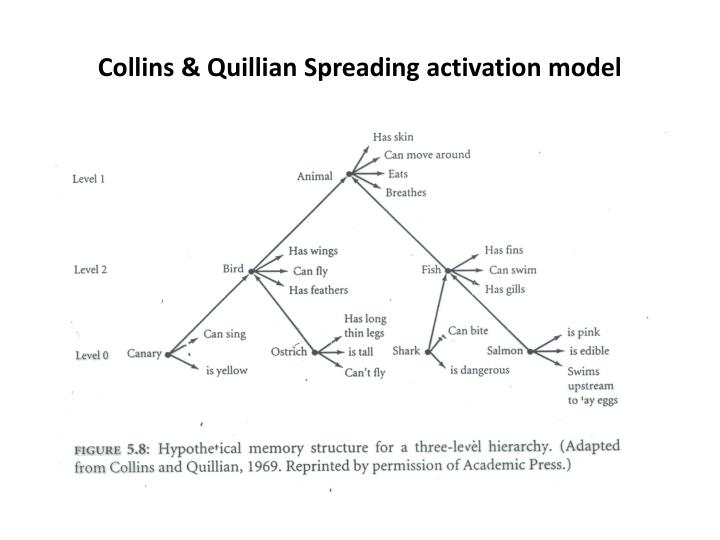 Collins & Quillian Spreading activation model