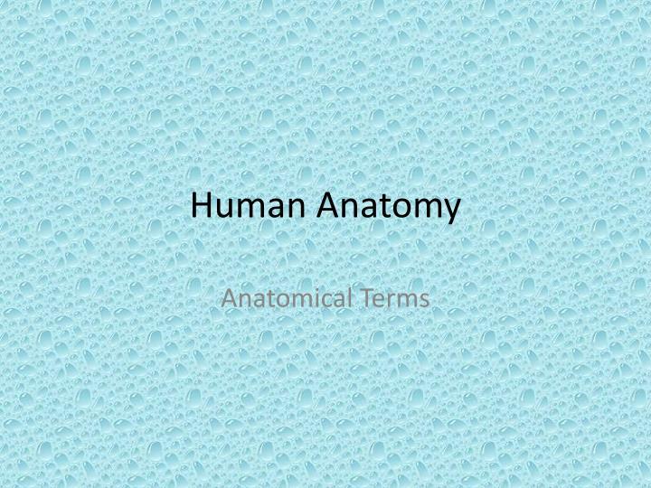 human anatomy n.