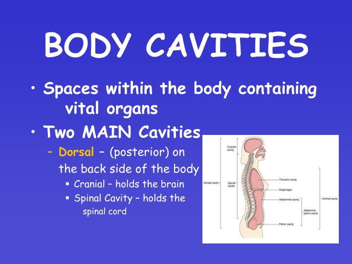 Body cavities1