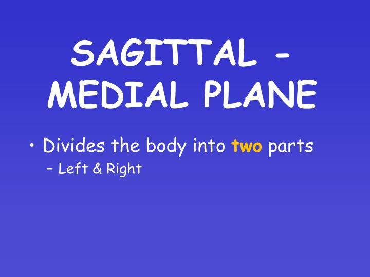 SAGITTAL - MEDIAL PLANE