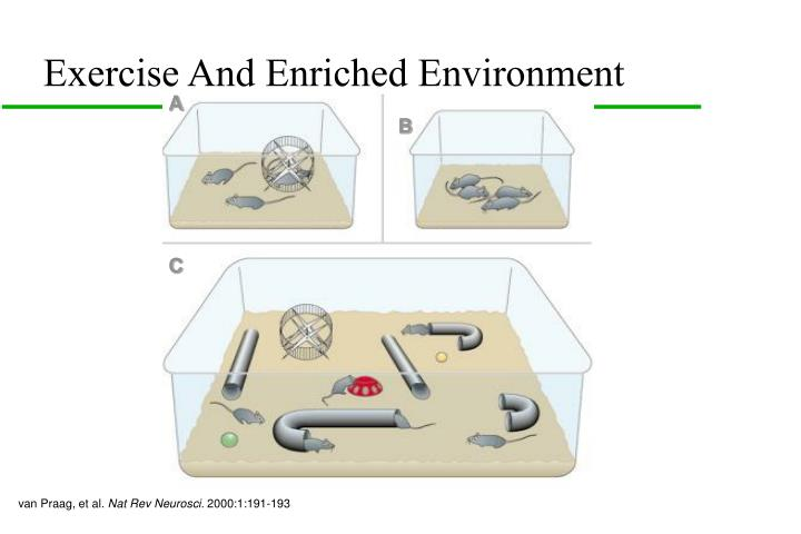 Exercise And Enriched Environment