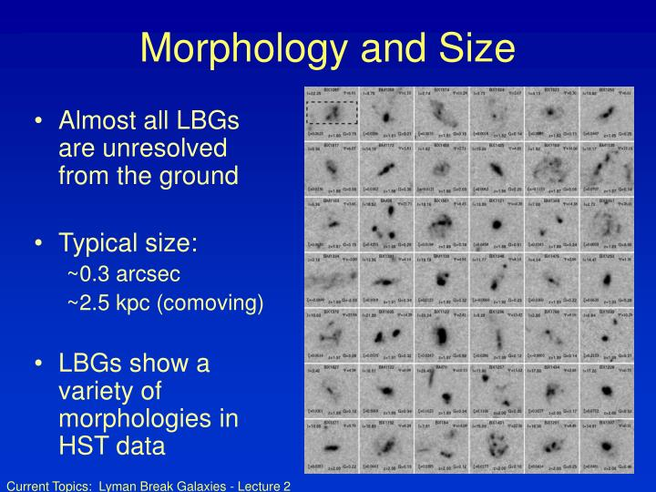 Morphology and Size