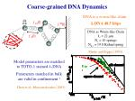 coarse grained dna dynamics