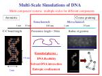 multi scale simulations of dna
