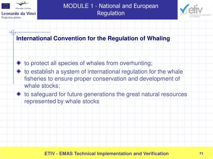 to protect all species of whales from overhunting;