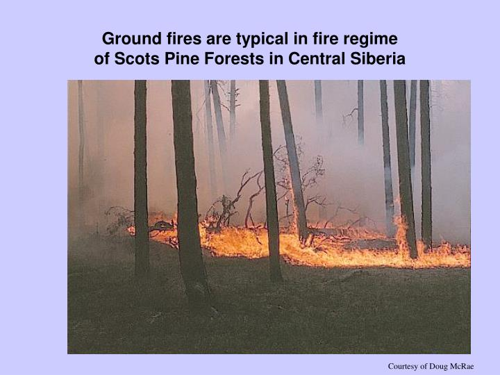 Ground fires are typical in fire regime