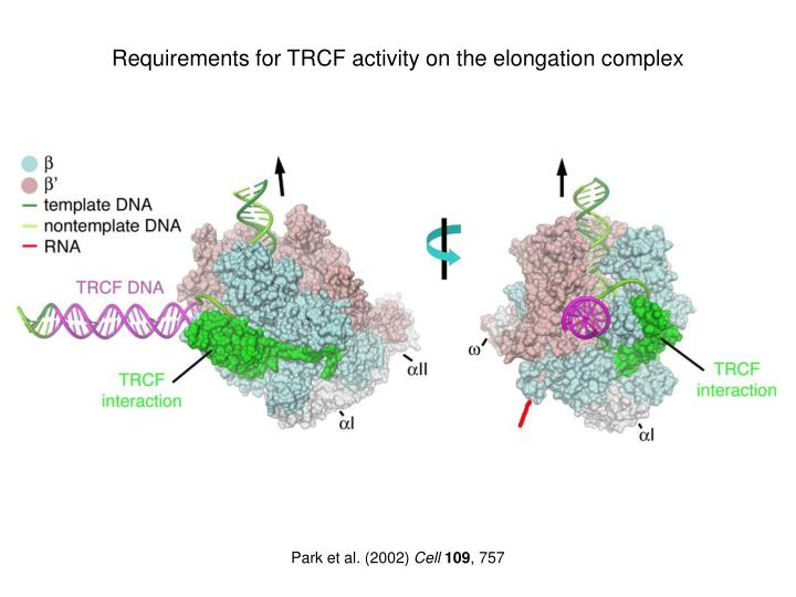 Requirements for TRCF activity on the elongation complex