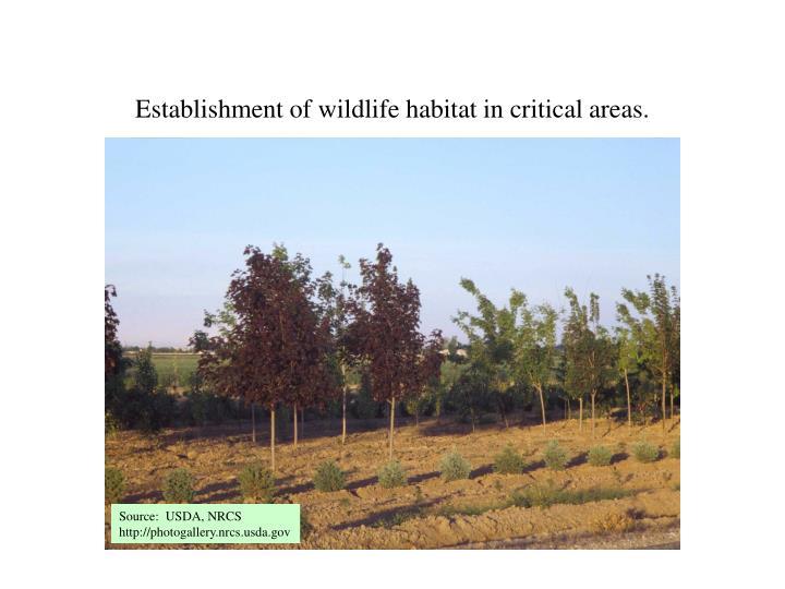 Establishment of wildlife habitat in critical areas.