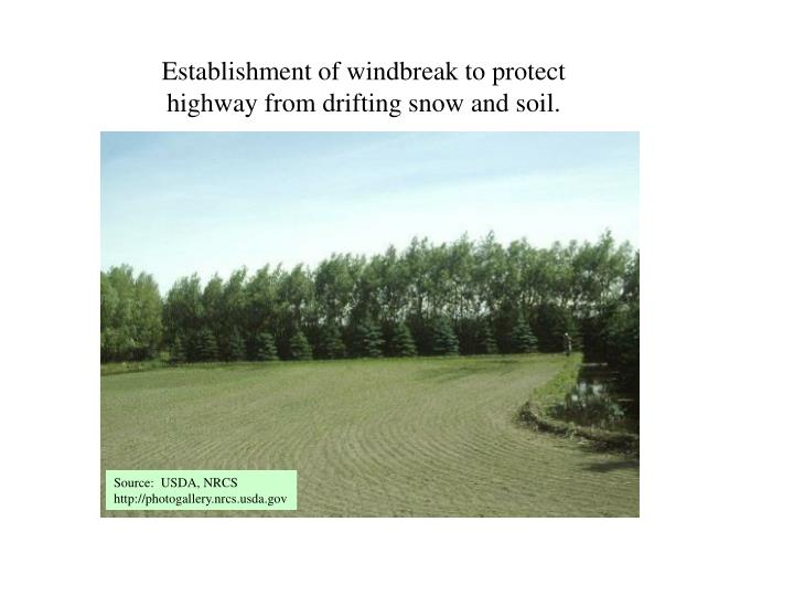 Establishment of windbreak to protect highway from drifting snow and soil.