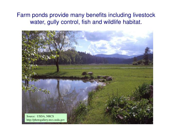 Farm ponds provide many benefits including livestock water, gully control, fish and wildlife habitat.