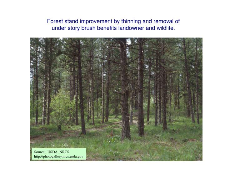 Forest stand improvement by thinning and removal of under story brush benefits landowner and wildlife.