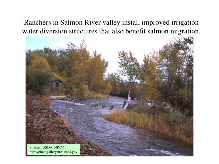 Ranchers in Salmon River valley install improved irrigation water diversion structures that also benefit salmon migration.