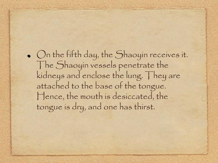 On the fifth day, the Shaoyin receives it. The Shaoyin vessels penetrate the kidneys and enclose the lung. They are attached to the base of the tongue. Hence, the mouth is desiccated, the tongue is dry, and one has thirst.