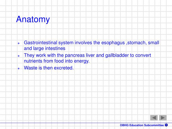 Gastrointestinal system involves the esophagus ,stomach, small and large intestines