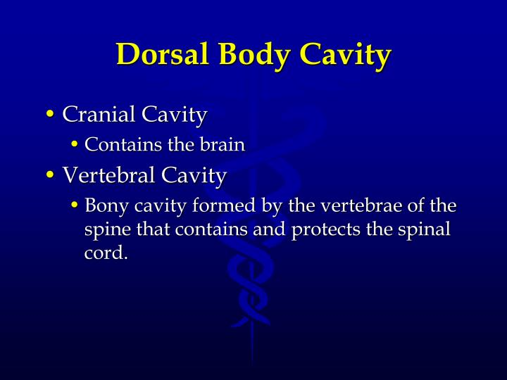 Dorsal Body Cavity