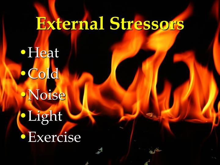 External Stressors