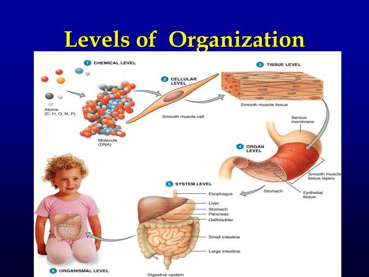 Levels of  Organization
