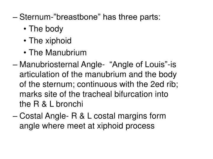 "Sternum-""breastbone"" has three parts:"