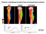 faxitron deiodinase mutants have increased bone mineral
