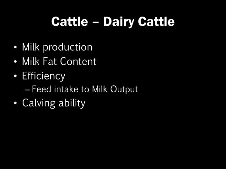 Cattle – Dairy Cattle