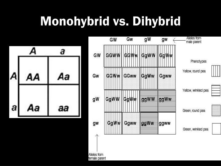 Monohybrid vs. Dihybrid